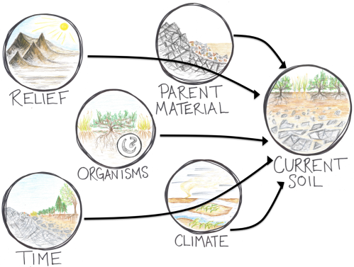 Scientists have names for all of these factors influencing a current soil: relief, time, organisms, parent material, and climate. Each factor might be at play in determining the amount of phosphorus available in Dry Valley soils.