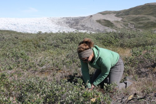 Big thinking is best done with colleagues. Here Rebecca investigates the soils around Kangerlussuaq, getting to know the dry soils so different from other Arctic systems.